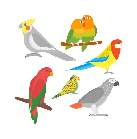 guacamaya caricatura: De dibujos animados loros pájaros y loros pájaros de animales salvajes. loros tropicales de la pluma de las aves de zoo fauna tropical Macaw Ara volando. dibujos animados Vaus aves exóticas establecidas con los loros ilustración vectorial Vectores