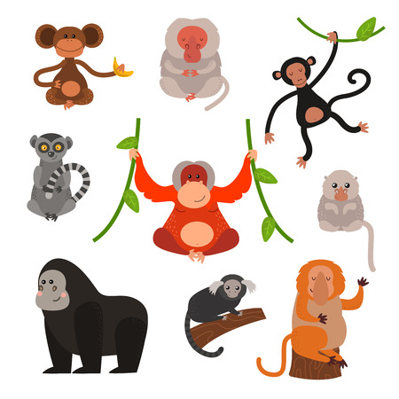 jungle jumping: Set of cartoon monkeys vector illustration. Monkey collection and jungle monkey big set. Monkey cute types and cute primate monkey. Monkey zoo jumping chimpanzee mammal. Illustration