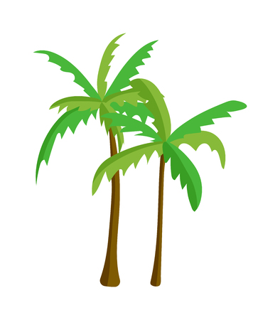natural arch: Green palm isolated on white background. Palm isolated vector green palm isolated. Palm isolated green plant nature and tropical palm isolated. Coconut tree stem growth tree.