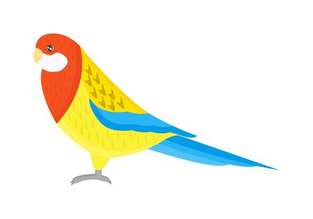 guacamaya caricatura: De dibujos animados de aves y loros p�jaro del loro animal salvaje. Tropicales de la pluma del loro zool�gico aves fauna tropical ara guacamaya volando. Vaus de dibujos animados de aves ex�ticas con los loros ilustraci�n vectorial
