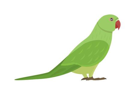 漫画オウム鳥とオウム野生動物鳥。熱帯オウム羽動物園鳥熱帯の動植物コンゴウインコ ara を飛行します。様々 な漫画のオウム イラスト ベクトルを