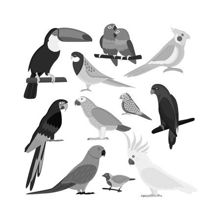 ara: Cartoon parrots set and parrots wild animal birds. Tropical parrots feather zoo birds tropical fauna macaw flying ara. Various cartoon exotic birds set with parrots illustration vector Illustration