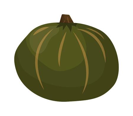 oriental season: Autumn pumpkin vegetable design. Pumpkin oriental bittersweet vector illustration. Orange halloween pumpkin vegetable collection. Harvest symbol season decoration.