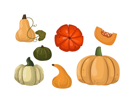oriental season: Autumn collection of pumpkin set elements design with different pumpkins oriental bittersweet vector illustration. Orange halloween pumpkin set vegetable collection. Harvest symbol season decoration.