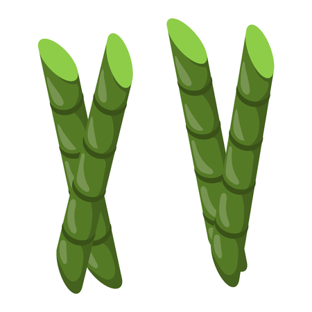 lucky bamboo: Branches of bamboo stem board vector green foliage. Feng shui green foliage vibrant tree bamboo stem. Tropical branch japanese natural gardening serene lucky bamboo stem botanical environment. Illustration
