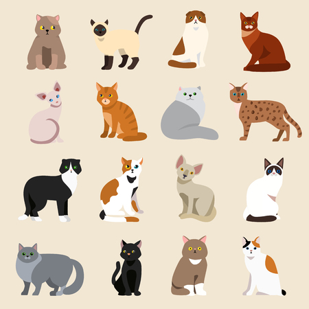 persian cat: Cat breeds cute pet animal set vector illustration. Cat breed animal and cartoon different cats. Mammal character human friend cat breed animals icons. Character cat portrait friend feline.
