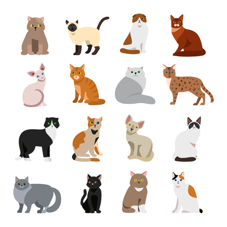 mammal: Cat breeds cute pet animal set vector illustration. Cat breed animal and cartoon different cats. Mammal character human friend cat breed animals icons. Character cat portrait friend feline.
