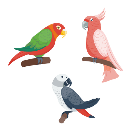 fauna: Cartoon parrots set and parrots wild animal birds. Tropical parrots feather zoo birds, tropical fauna macaw flying ara. Various cartoon exotic birds set with parrots vector illustration. Illustration