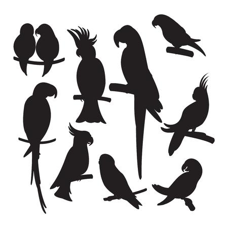 Cartoon parrots set and parrots wild animal birds. Tropical parrots feather zoo birds, tropical fauna macaw flying ara. Various cartoon exotic birds set with parrots vector illustration. Vectores