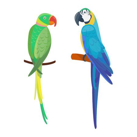fauna: Cartoon parrot wild animal bird. Tropical parrot feather zoo bird, tropical fauna macaw flying ara. Cartoon exotic bird vector illustration.
