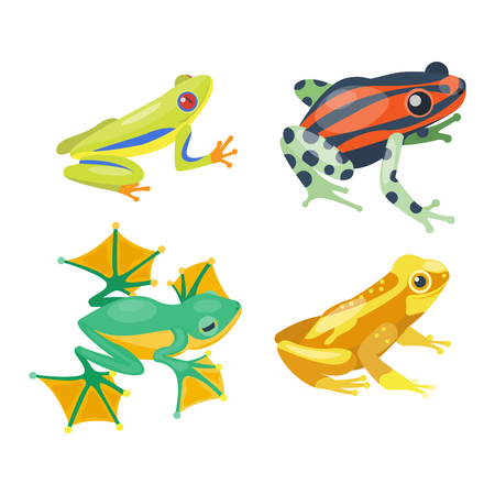 bullfrog: Frog cartoon tropical animal and green frog cartoon nature icons. Funny frog cartoon collection vector illustration. Green, wood, red toxic frogs flat syle isolated on white background Illustration