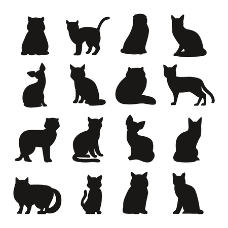 feline: Cat breeds cute pet animal set vector illustration. Cat breed animal and cartoon different cats. Mammal character human friend cat breed animals icons. Character cat portrait friend feline.
