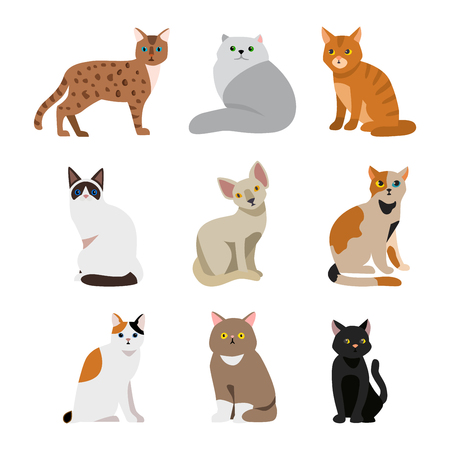 persian cat: Cat breeds cute pet animal set vector illustration. Cat breed animal and cartoon different cats. Mammal character human friend cat breed animals icons. Character cat portrait friend feline.