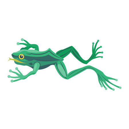 croaking: Frog cartoon tropical animal cartoon nature icon. Funny frog cartoon vector illustration. Some frog flat syle isolated on white background