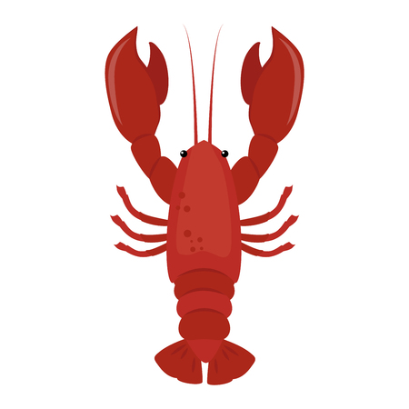 crustacean: Lobster vector flat illustration isolated on white background. Fresh seafood lobster icon claw meal isolated. Gourmet crustacean cooked red dinner lobster marine food fresh fish delicious vector.