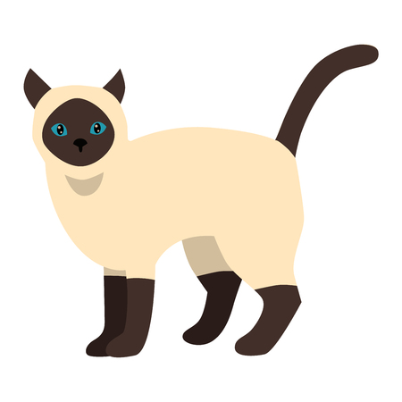 siamese cat: Siamese cat cartoon style vector silhouette. Cute domestic cat animal sitting. Cartoon siamese cat young adorable tail symbol playful. Cartoon funny domestic pussy kitty siamese cat sit character Illustration