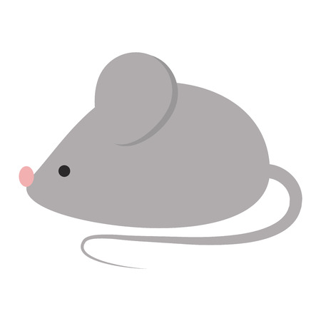 mammal: Gray cute mouse isolated on white background. Vector rodent character, mammal gray cute mouse isolated. Fur pest domestic paw small mouse isolated. Hairy whisker wildlife animal character.
