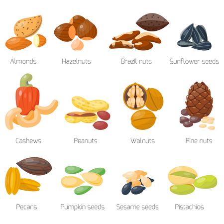 Piles of different nuts groundnut, pistachio hazelnut almond, peanut, walnut, cashew chestnut cedar nut and brazil. Organic collection nutshell group different nuts. Different nuts assortment. Vettoriali