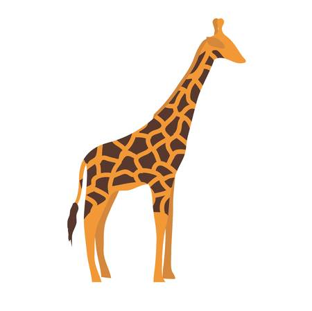 brindled: Giraffe cartoon illustration. Wild mammal giraffe slim neck zoo animal. giraffe savanna portrait wilderness horned animal. Tropical mammal standing with long neck.