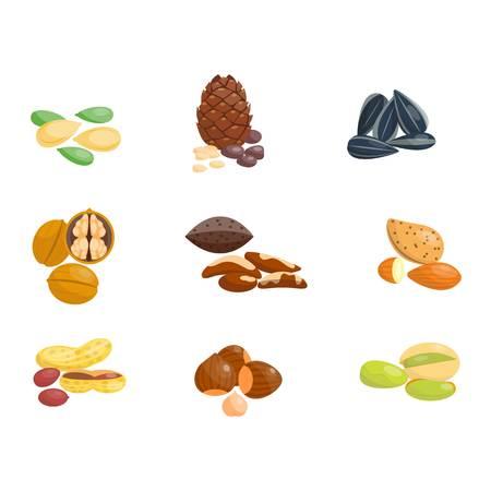 brazil nut: Piles of different nuts groundnut, pistachio hazelnut almond, peanut, walnut, cashew chestnut cedar nut and brazil. Organic collection nutshell group different nuts. Different nuts assortment. Illustration