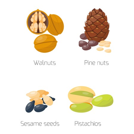sesame seeds: Piles of different nuts pistachio walnut sesame seeds pine nuts cedar nut Organic collection nutshell group different nuts. Different nuts assortment. Illustration