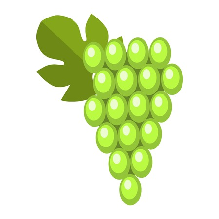 Green wet Isabella grapes bunch isolated. Vine fruit nature berry healthy diet food vector. Cartoon fresh dessert winery sweet natural seasonal health agriculture Illustration