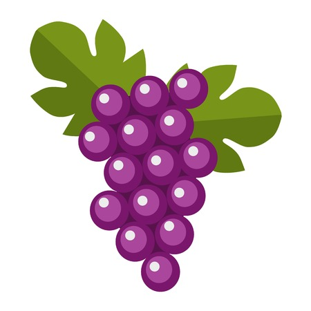 isabella: Blue wet Isabella grapes bunch isolated. Vine fruit nature berry healthy diet food vector. Cartoon fresh dessert winery sweet natural seasonal health agriculture