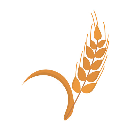 Ears of wheat agriculture food natural vector illustration.
