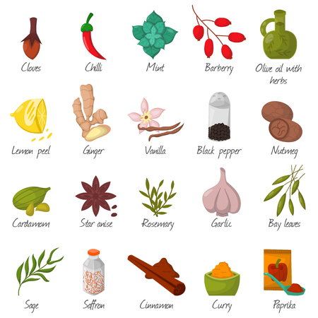 Spices, condiments and herbs decorative elements and icons. Seeds, fruit, flower buds, leaves, blends and roots of seasoning food plants. Healthy organic vegetable.