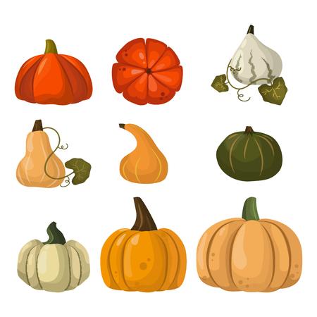 Fresh orange pumpkin vegetable isolated vector illustration.