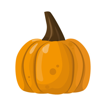 pumpkin patch: Fresh orange pumpkin vegetable isolated vector illustration.