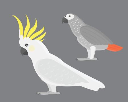 Cartoon tropical cockatoo parrot wild animal bird vector illustration.
