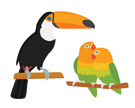 macaw: Cartoon tropical parrot wild animal bird vector illustration.