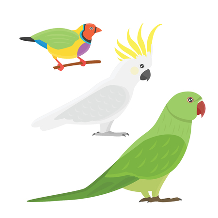 Cartoon tropical parrot wild animal bird vector illustration.