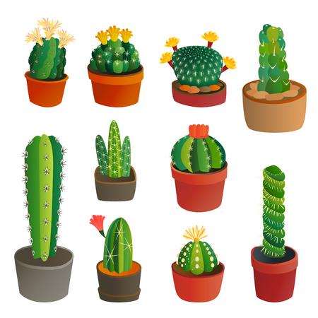 Cactus plat stijl natuur woestijn bloem groen cartoon tekening grafisch Mexicaans succulent en tropisch plantaardig tuin kunst cactussen bloemen vector illustratie.