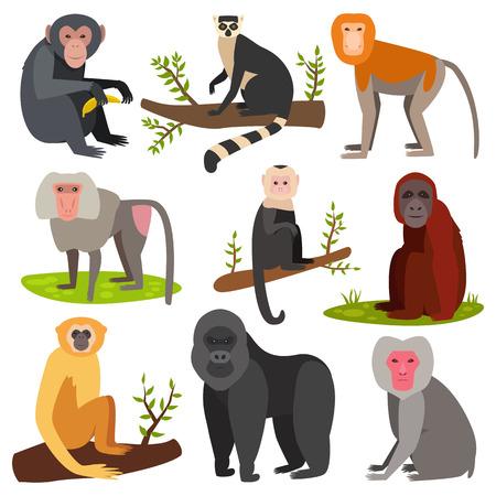 gorila: Different breads monkey character animal wild vector set illustration