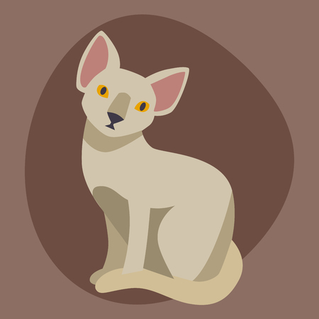 Cat breed sphinx cute pet portrait fluffy young adorable cartoon animal and pretty fun play feline sitting mammal domestic kitty vector illustration.