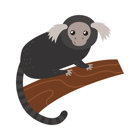 Capuchin monkey rare animal vector.