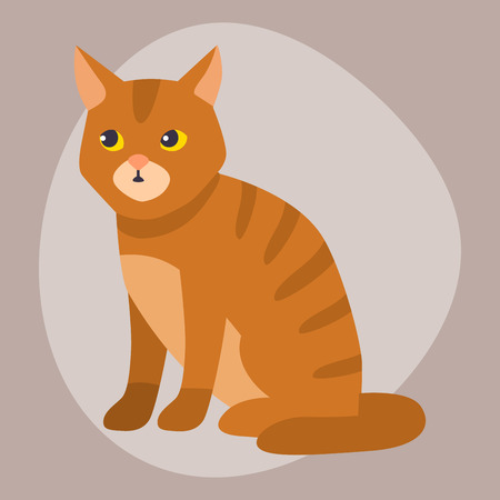 Cat breed cute pet portrait fluffy young adorable cartoon animal and pretty fun play feline sitting mammal domestic kitty vector illustration. Stock Photo