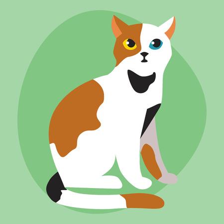 Cat breed cute pet portrait fluffy white black red adorable cartoon animal and pretty fun play feline mammal domestic kitty vector illustration.