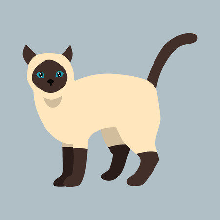 Cat breed siamese cute pet white black fluffy young adorable cartoon animal and pretty fun play feline sitting mammal domestic kitty vector illustration.