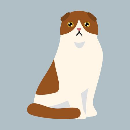 Cat breed british shorthair cute pet white red fluffy adorable cartoon animal and pretty fun play feline sitting mammal domestic kitty vector illustration.