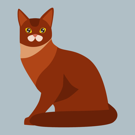 Cat breed abyssinian cute pet portrait fluffy red adorable cartoon animal and pretty fun play feline sitting mammal domestic kitty vector illustration.