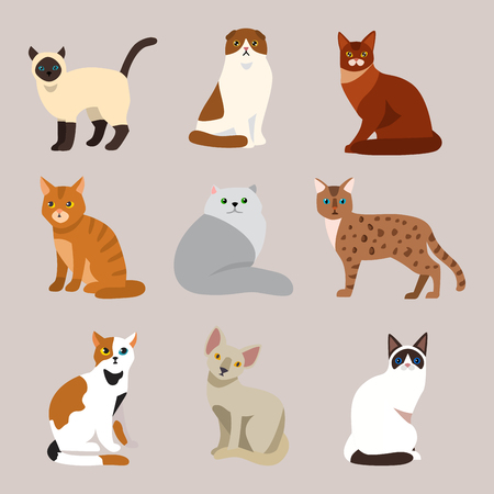 Cat breed cute pet portrait fluffy young adorable cartoon animal and pretty. Illustration
