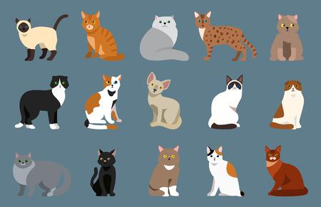 猫のかわいいペット肖像画ふわふわの若いかわいい漫画の動物の品種とはかなり楽しい遊び猫哺乳類国内キティ ベクトル図を座っています。