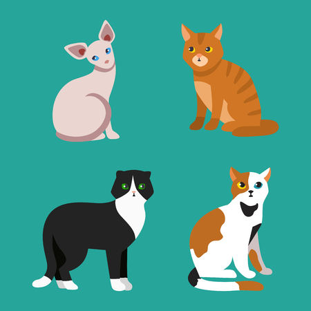 Cat breed cute pet portrait fluffy young adorable cartoon animal and pretty fun play feline sitting mammal domestic kitty vector illustration. Illustration