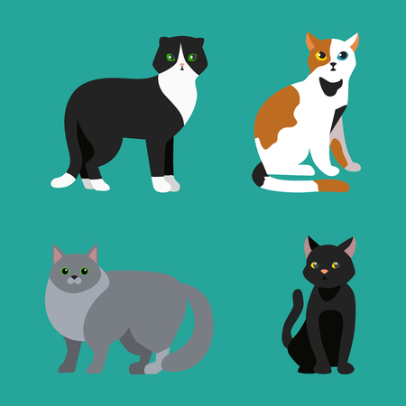 Cat breed cute pet portrait fluffy young adorable cartoon animal and pretty fun play feline sitting mammal domestic kitty vector illustration. Çizim