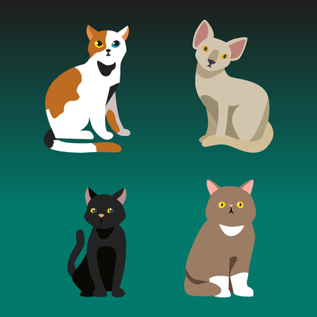 Cat breed cute pet portrait fluffy young adorable cartoon animal