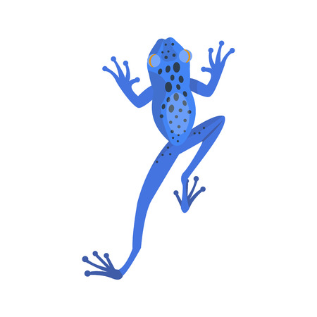 Frog cartoon tropical blue animal cartoon nature icon funny and isolated mascot character wild funny forest toad amphibian vector illustration.