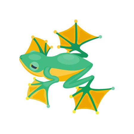 Frog cartoon tropical green animal cartoon nature icon funny and isolated mascot character wild funny forest toad amphibian vector illustration. Stock Vector - 74469246